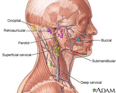 Lymph tissue in the head and neck